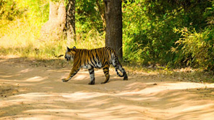 9 seater tempo traveller hire in Bandhavgarh Fort